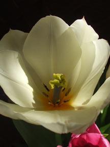 20040405-5.jpg